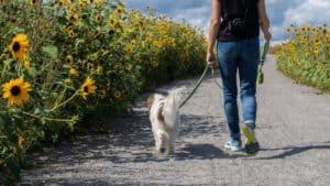 Business Idea: Dog Walking